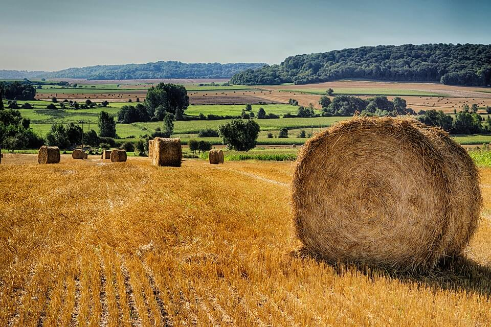 A bundle of hay in open field during day time