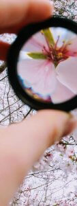 A magnifying glass giving an amplified view of a flower.